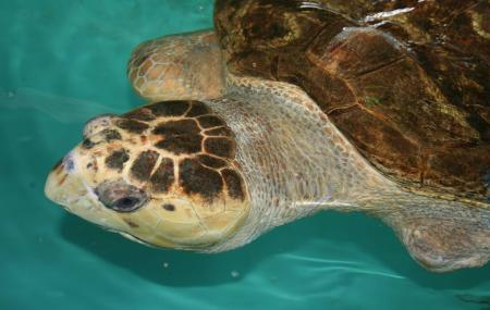 Sea Turtle, Inc Image