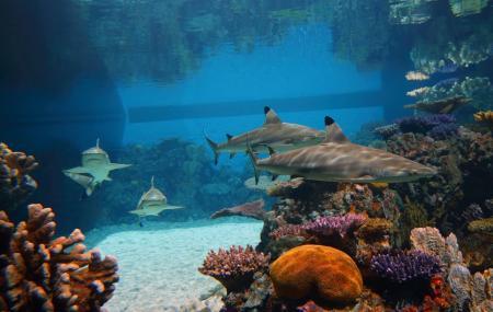 National Aquarium Image