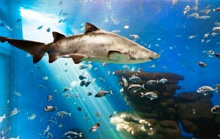 Palma Aquarium, Palma De Mallorca