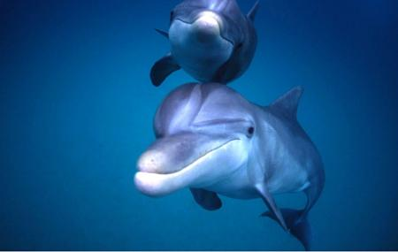 Shell Island Blue Dolphin Tours Image
