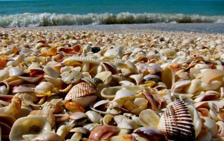 Shell Island Image