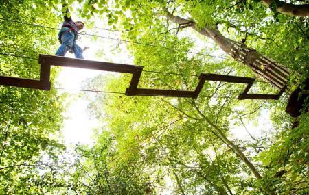 Go Ape Treetop Adventure Course Image