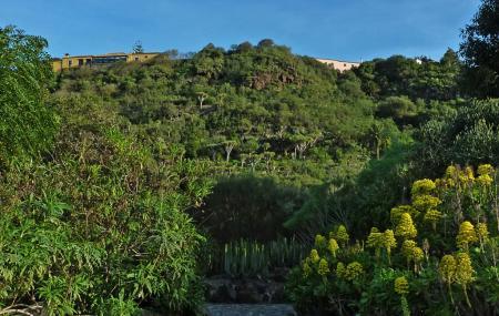 Jardin Botanico Canario Viera Y Clavijo Image