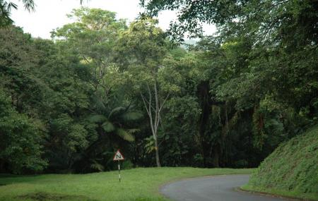 Tobago Forest Reserve, Scarborough