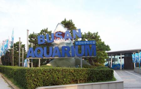 Sea Life Busan Aquarium Image