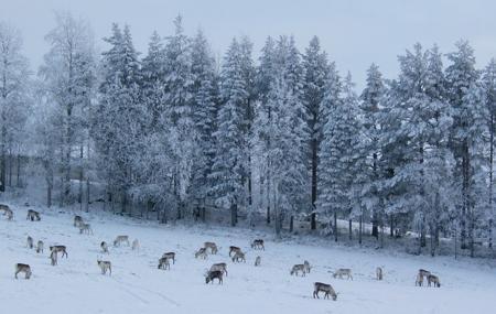 Gabba Reindeer Safari Park Image
