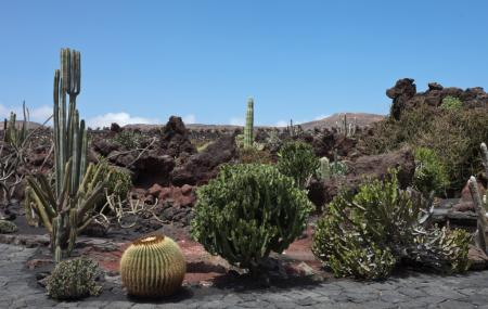 Jardin De Cactus Lanzarote Reviews Ticket Price Timings