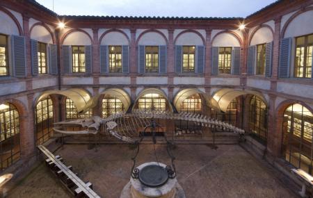 Natural History Museum Of Siena Or Museo Di Storia Naturale Dell'accademia Dei Fisiocritici Image