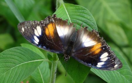 Coffs Harbour Butterfly House Image