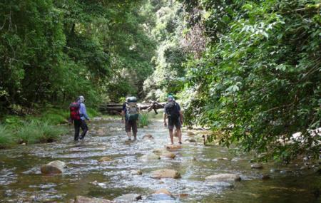 Bellinger River National Park Image