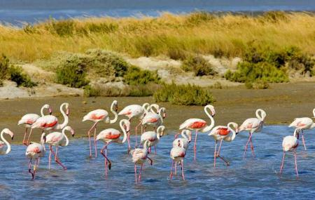 Camargue Nature Park Image