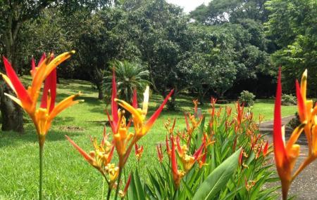 Botanical Orchid Garden Image