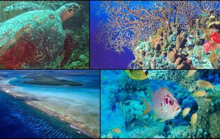 Belize Barrier Reef Image