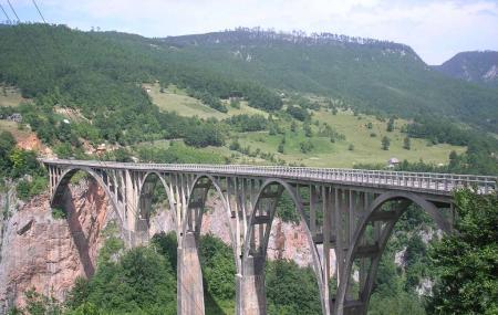 Tara Bridge Image