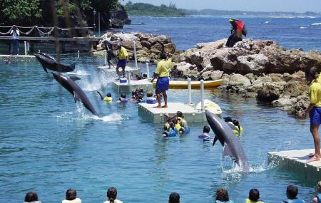 Dolphin Cove Negril Image