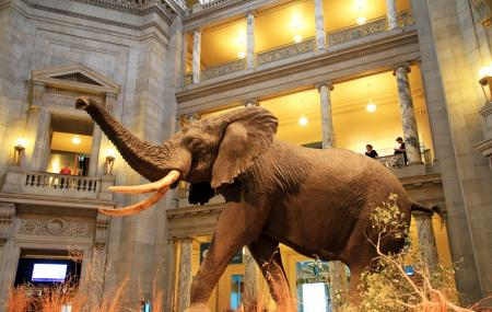 Museum Of Natural History Image