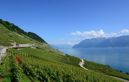 Corniche Lavaux Vineyards Image