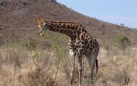 Pilanesberg National Park And Game Reserve Image