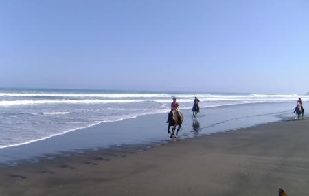 Wild Coast Ruapuke Image