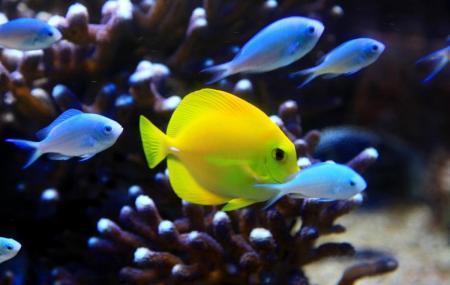 Aquarium De Vannes Image
