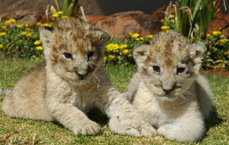 Ukutula Lion Park And Lodge Image