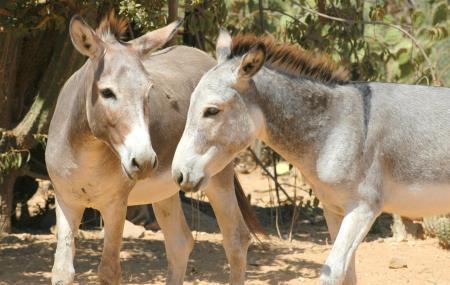 Donkey Sanctuary Image