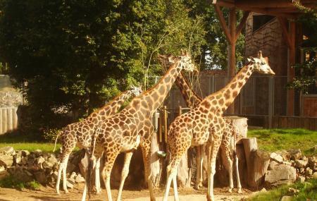 Riga Zoo Image