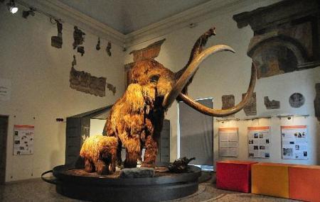 Museo Di Scienze Naturali Caffi Image