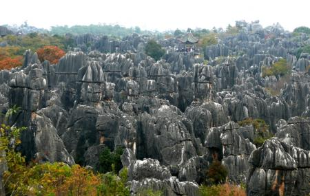 Shilin Stone Forest Image