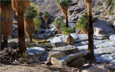 Agua Caliente Indian Canyons Image
