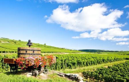 Taste Burgundy Wine School Image