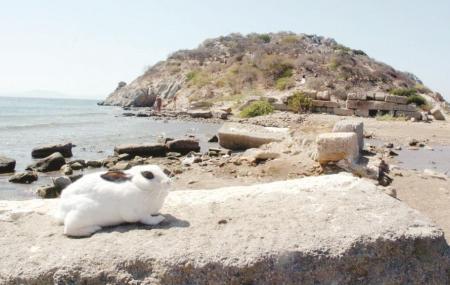Rabbit Island Image