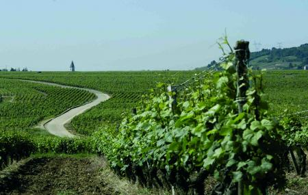 Burgundy Wine Route Between Beaune And Dijon Image