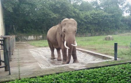 Chongqing Zoo Image