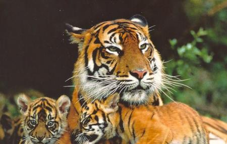 Siberian Tiger Park Image
