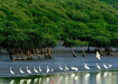 Shenzhen Mangrove Nature Reserve Image