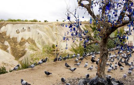 Pigeon Valley Image