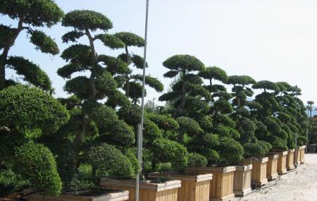 bonsai zentrum heidelberg