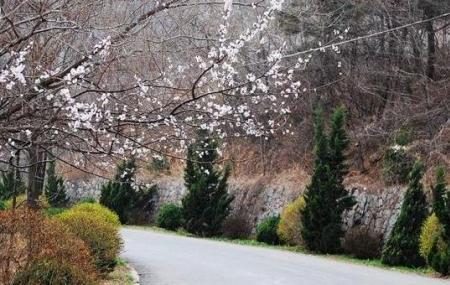 Jinlong Temple Forest Park Image