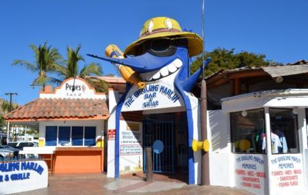 Giggling Marlin Image
