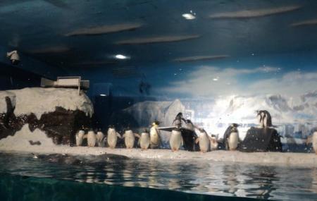 Ji Di Guan - Pole Aquarium Image