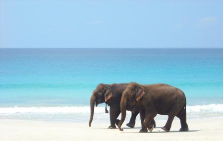 Elephant Beach Image