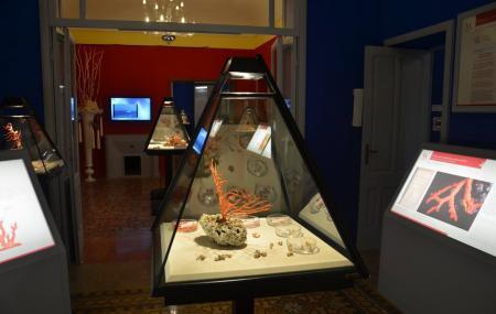 Museo Del Corallo Image