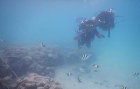 Blue Corals Dive Image