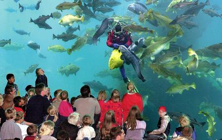 Alesund Aquarium Image