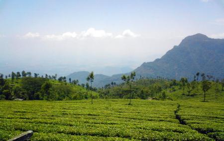 Kausani Tea Estate, Kausani