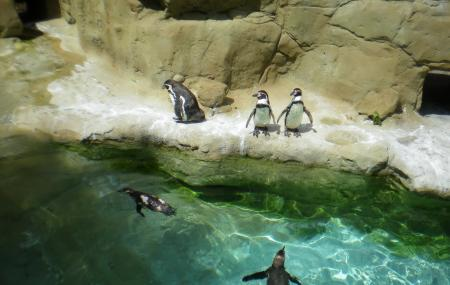 Parc Zoologique Image