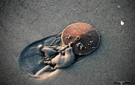 Sand Dollar Beach Image