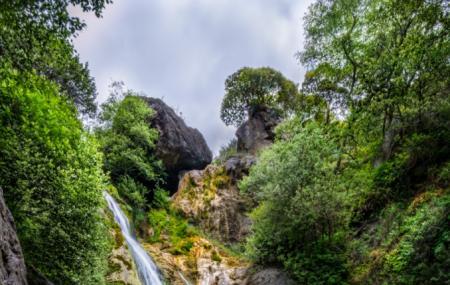 Salmon Creek Falls Trail Image