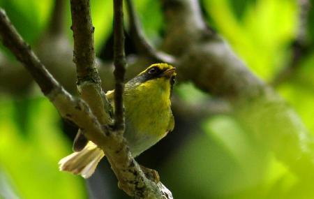 Pangot And Kilbury Bird Sanctuary Image